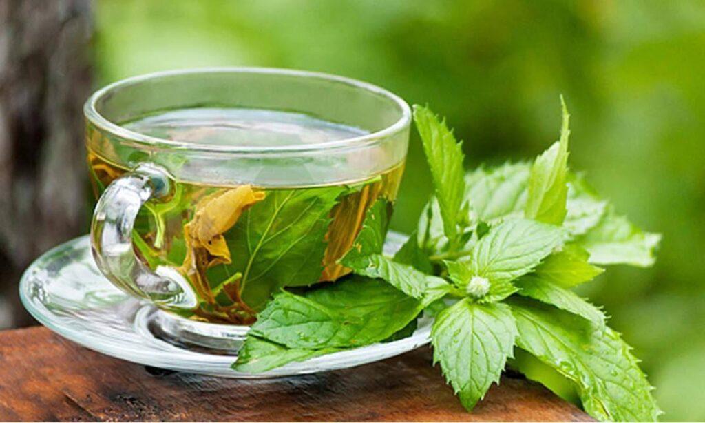 فوائد الشاي الأخضر الصحية للجسم والبشرة والآثار الجانبية له