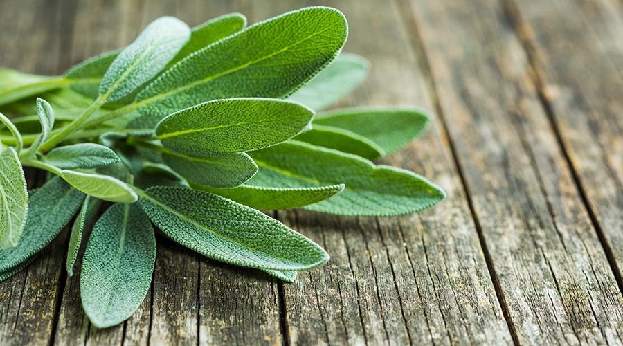 أهم استخدامات وفوائد عشبة المريمية المتعددة والمدهشة تعرف عليها الآن